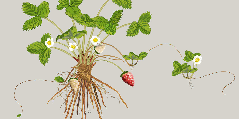 Abdel-Salhi-credit---image-courtesy-of-Bonnie-Plants_web